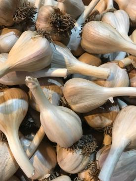 garliccloseup