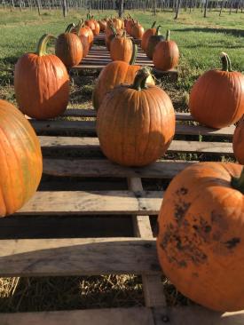 pumpkin2020b
